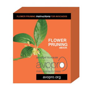 avopro-avocado-flower-pruning