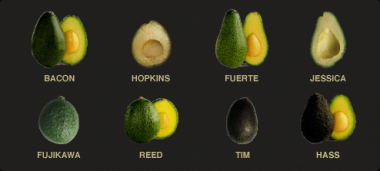 avopro avocado varieties